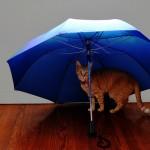 ウォーキング歴10年の私がたどり着いた傘が陛下御用達だった件