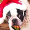 ダイエット中のクリスマス、ケンタッキーフライドチキンのカロリーは?